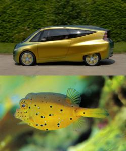 The yellow boxfish, and the Bionic Concept Vehicle it inspired.
