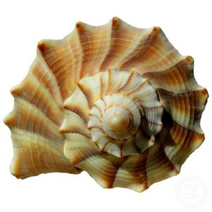 A seashell is just one example of the mathematical golden ratio found in nature.