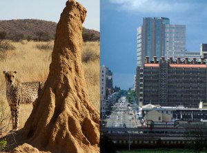 A termite hill can easily regulate temperature, even in drastic outside conditions, a system used by the Eastgate Building in Zimbabwe.